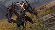 Guild Wars 2 - Le Guerrier